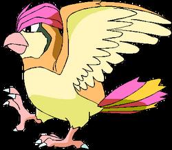 017 Pidgeotto OS3