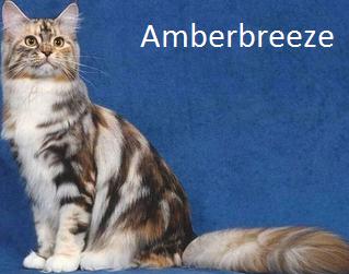 File:Amberbreeze.png