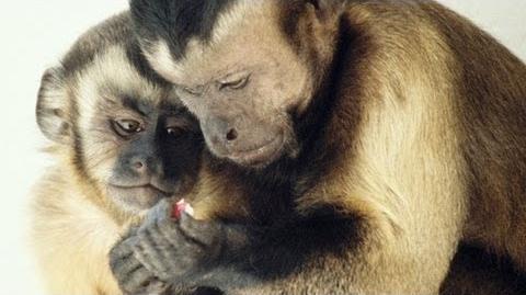 Frans de Waal Moral behavior in animals