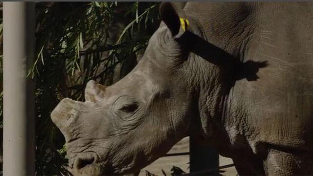 File:Rhino2.jpg