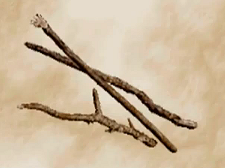 File:Twigs.png