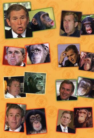 File:Bush-2.jpg