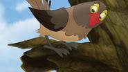 Ono-the-tickbird (417)