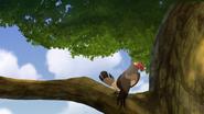 Ono-the-tickbird (382)