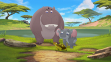Follow-that-hippo (201)