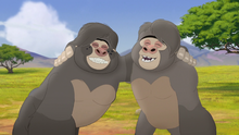 The-lost-gorillas (110)