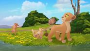 Baboons (104)