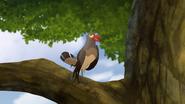 Ono-the-tickbird (406)