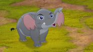 Follow-that-hippo (44)