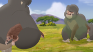 The-lost-gorillas (45)