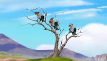 Baboons (324)