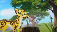 Baboons (240)