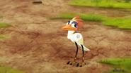 Ono-the-tickbird (181)