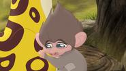 Baboons (237)