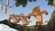 The-traveling-baboon-show (177)