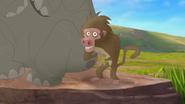 Follow-that-hippo (13)