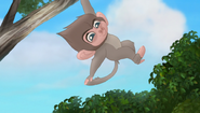 Baboons (196)