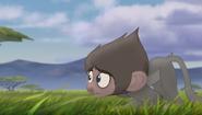 Baboons (28)