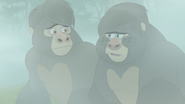 The-lost-gorillas (276)