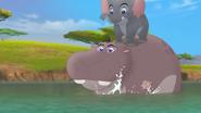 Follow-that-hippo (333)