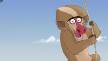 The-traveling-baboon-show (155)
