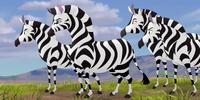Muhimu's Herd/Gallery