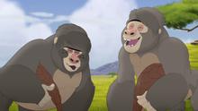 The-lost-gorillas (48)