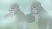 The-lost-gorillas (285)