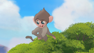 Baboons (203)