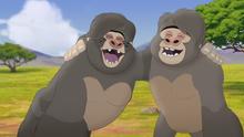 The-lost-gorillas (116)