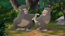 The-lost-gorillas (186)