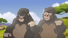 The-lost-gorillas (68)