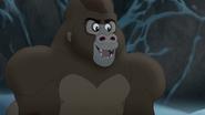 The-lost-gorillas (479)