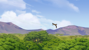 Ono-the-tickbird (322)