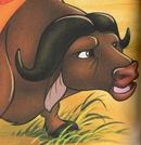 Kula (cape buffalo)