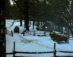 Bigwoods1