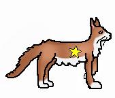 LOOO Luckstar