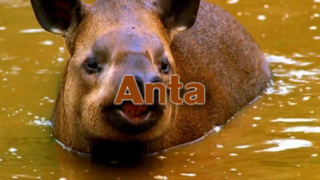 File:Anta Tribe.png