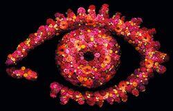 Big Brother 2010