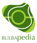 Bulbapedia 3