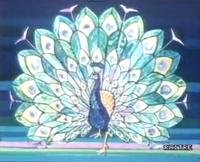 Rai peacock ID