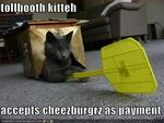 Tollbooth-cat-will-accept-burger-payment
