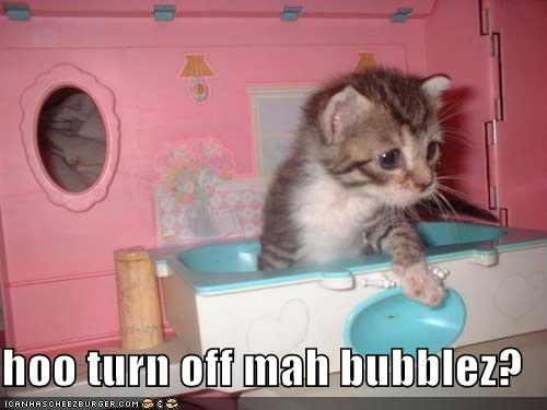 File:Funny-pictures-kitten-toy-bathtub.jpg