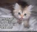 Minor LOLcats