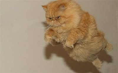 File:Inspirational-end-cat-copy.jpg