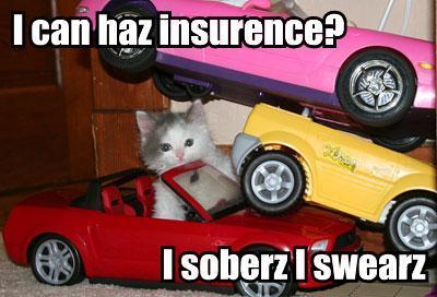 File:Drunkcat.jpg