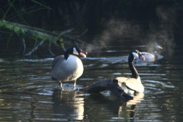 File:Wildlife 021.jpg