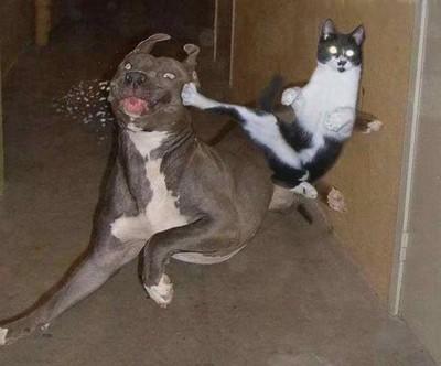 File:Cat kicks dog-12362.jpg
