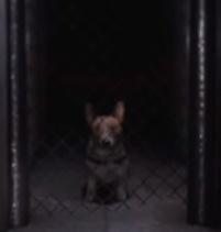 File:Dog?.jpg