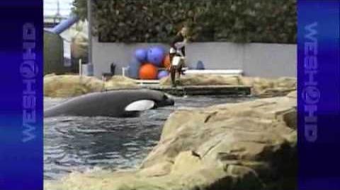 Tourist's Camera Rolls Seconds Before Killer Whale Attacks SeaWorld Trainer